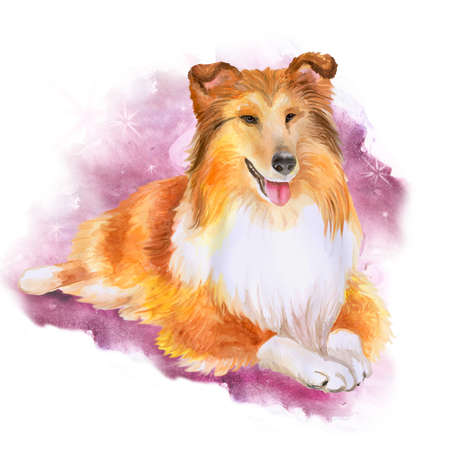 sheepdog: Watercolor portrait of red Collie or Sheltie, Shetland sheepdog breed dog isolated on purple background. Hand drawn sweet pet. Bright colors, realistic look. Greeting card design. Clip art. Add text