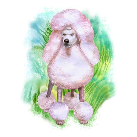 animalia: Watercolor portrait of white King Poodle breed dog isolated on green background. Hand drawn sweet pet. Bright colors, realistic look. Greeting card design. Clip art. Add your text Stock Photo