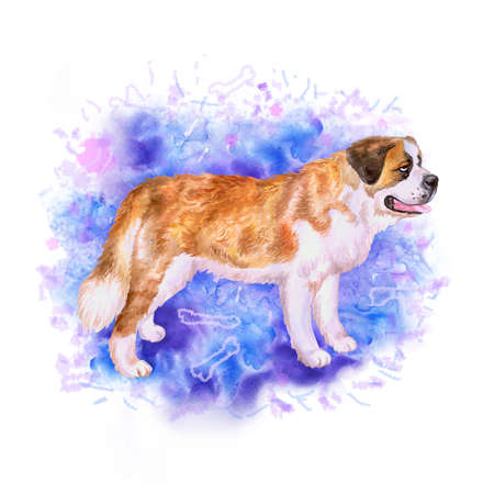 saint bernard: Watercolor portrait of Swiss Alpine mastiff red St Bernard breed dog isolated on blue background. Hand drawn sweet pet. Bright colors, realistic look. Greeting card design. Clip art. Add your text