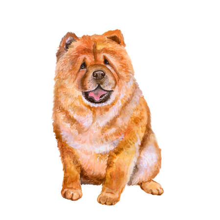 Watercolor portrait of red Chinese Chow Chow breed dog isolated on white background. Hand drawn sweet pet. Bright colors, realistic look. Greeting card design. Clip art. Add your text