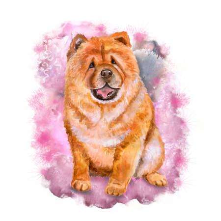 chow: Watercolor portrait of red Chinese Chow Chow breed dog isolated on pink background. Hand drawn sweet pet. Bright colors, realistic look. Greeting card design. Clip art. Add your text