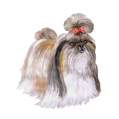 Aquarel portret van Tibet Shih Tzu Chinese leeuw hond ras hond op een witte achtergrond. Hand getrokken lief huisdier. Heldere kleuren, realistische look. Wenskaart design. Clip art. Voeg uw tekst Stockfoto