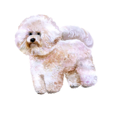 frise: Watercolor portrait of white Canary Islands, Spain, Belgium, France bichon frise dog isolated on white background. Hand drawn sweet pet. Bright colors. Greeting card design. Clip art. Add your text