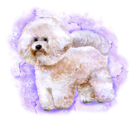 pure breed: Watercolor portrait of white Canary Islands, Spain, Belgium, France bichon frise dog isolated on purple background. Hand drawn sweet pet. Bright colors. Greeting card design. Clip art. Add your text Stock Photo
