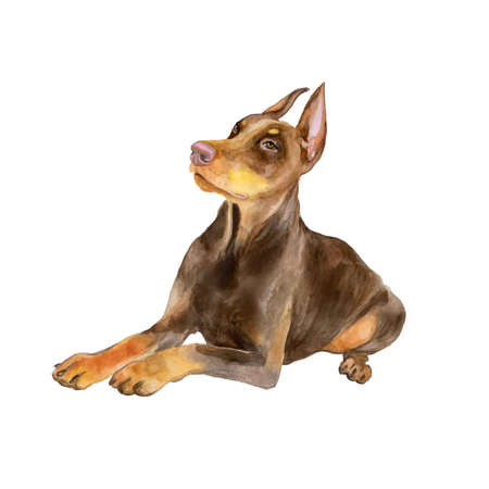Watercolor portrait of black German Dobermann Pinscher breed dog isolated on white background. Hand drawn sweet pet. Bright colors, realistic look. Greeting card design. Clip art. Add your text