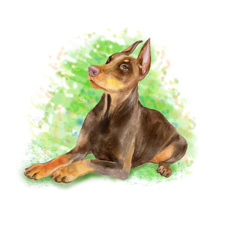 pinscher: Watercolor portrait of black German Dobermann Pinscher breed dog isolated on green background. Hand drawn sweet pet. Bright colors, realistic look. Greeting card design. Clip art. Add your text Stock Photo