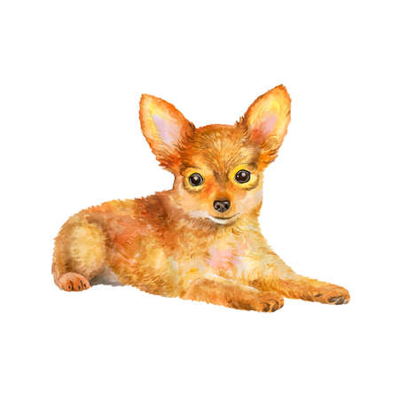 russkiy: Watercolor portrait of red Russian toy terrier breed dog isolated on white background. Hand drawn sweet pet. Bright colors, realistic look. Greeting card design. Clip art. Add your text