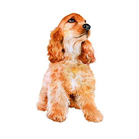 Aquarel portret van rode Engels, Amerikaans cocker spaniel ras hond op een witte achtergrond. Hand getrokken lief huisdier. Heldere kleuren, realistische look. Wenskaart design. Clip art. Voeg uw tekst
