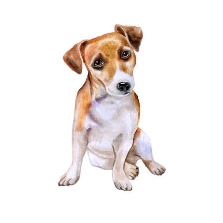 흰색 배경에 고립 된 영어 잭 러셀 테리어 강아지의 수채화 초상화. 손으로 그린 달콤한 애완 동물입니다. 밝은 색상, 사실적인 표정. 인사말 카드  스톡 콘텐츠
