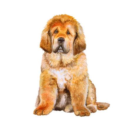 Aquarel portret van de Tibetaanse Mastiff ras hond op een witte achtergrond. Hand getrokken lief huisdier. Heldere kleuren, realistische look. Wenskaart design. Clip art. Voeg uw tekst Stockfoto