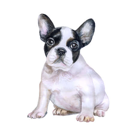 Watercolor portrait of white and black French bulldog breed dog isolated on white background. Hand drawn sweet pet. Bright colors, realistic look. Greeting card design. Clip art. Add your text