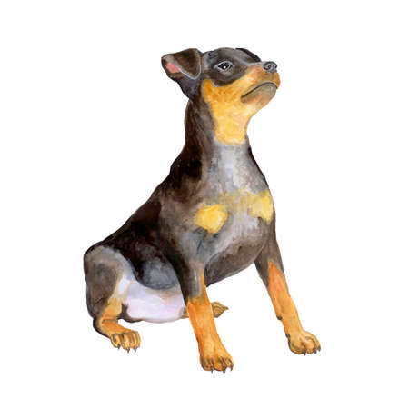 pincher: Watercolor portrait of black German zwergpinscher, miniature doberman breed dog isolated on white background. Hand drawn sweet pet. Bright colors, realistic look. Greeting card design. Clip art Stock Photo
