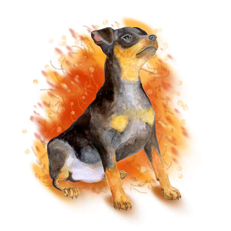 miniature breed: retrato de la acuarela de negro zwergpinscher alem�n, perro miniatura de raza doberman aislado en el fondo naranja. Dibujado a mano dulce mascota. Los colores brillantes, aspecto realista. Dise�o de la tarjeta. Clipart Foto de archivo