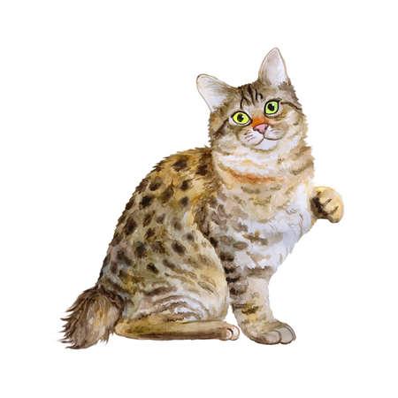 Waterverf portret van Amerikaanse Bobtail kort staart kat geïsoleerd op een witte achtergrond. Hand getekend zoet huisdier. Heldere kleuren, realistische look. Smaragdgroene ogen. Groetkaart ontwerp. Clip art. Voeg tekst toe