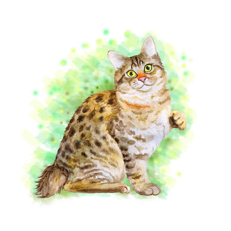 bobtail: Watercolor portrait of American Bobtail short tail cat isolated on green background. Hand drawn sweet home pet. Bright color, realistic look. Emerald eyes. Greeting card design. Clip art. Add text