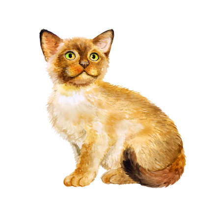 birman kitten: Watercolor portrait of Sacred birman kitten, Sacred cat of Burma isolated on white background. Hand drawn sweet home pet. Bright colors, realistic look. Emerald eyes. Greeting card design. Clip art