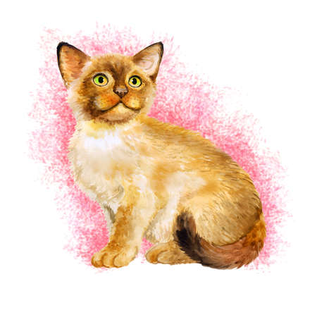 birman kitten: Watercolor portrait of Sacred birman kitten, Sacred cat of Burma isolated on pink background. Hand drawn sweet home pet. Bright colors, realistic look. Emerald eyes. Greeting card design. Clip art