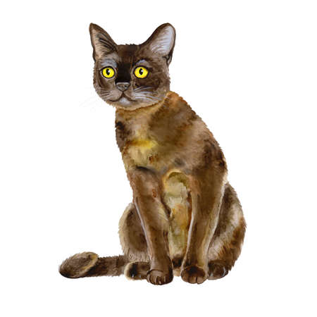 Watercolor portrait of American Bombay shorthair cat isolated on white background. Hand drawn sweet home pet. Bright colors, realistic look. Yellow eyes. Greeting card design. Clip art. Add any text Stock Photo