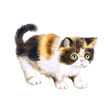 longhair: Watercolor portrait of Persian tricolor longhair cat isolated on white background. Hand drawn sweet home pet. Bright colors, realistic look. Emerald eyes. Greeting card design. Clip art. Add any text