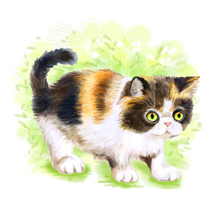 longhair: Watercolor portrait of Persian tricolor longhair cat isolated on green background. Hand drawn sweet home pet. Bright colors, realistic look. Emerald eyes. Greeting card design. Clip art. Add any text