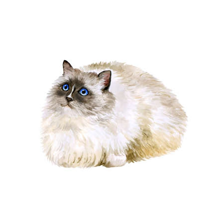 ragdoll: Watercolor portrait of American, USA Ragdoll cat isolated on white background. Hand drawn sweet home pet. Bright colors, realistic look. Blue eyes. Greeting card design. Clip art. Add text