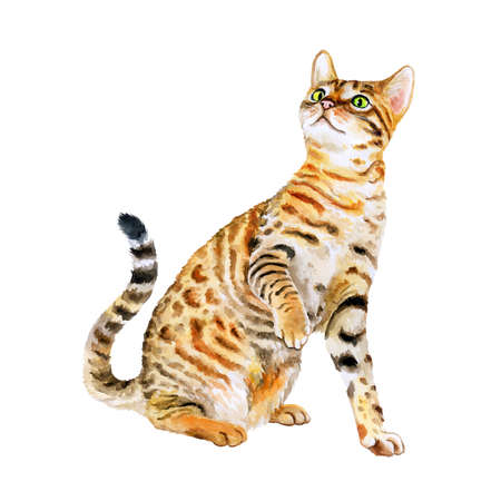 Aquarel portret van de Amerikaanse Savannah kat die op een witte achtergrond. Hand getrokken huis huisdier zoet. Heldere kleuren, realistische look. Emerald ogen. Wenskaart design. Clip art. Voeg tekst toe Stockfoto