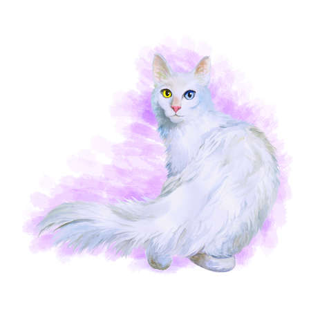 dominant: Watercolor portrait of Turkish Angora cat with odd eyes isolated on pink background. Hand drawn sweet home pet. Bright colors, realistic look. Emerald eyes. Greeting card design. Clip art. Add text