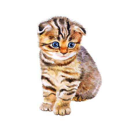 Aquarel portret van de Britse scottish fold kat met oneven ogen die op een witte achtergrond. Hand getrokken huis huisdier zoet. Heldere kleuren, realistische look. Blauwe ogen. Wenskaart design. Clip art Stockfoto