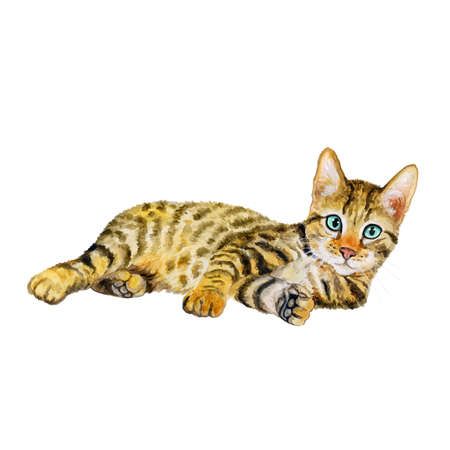 Aquarel portret van serengeti kat met stippen, strepen op een witte achtergrond. Hand getrokken gedetailleerd huis huisdier zoet. Heldere kleuren, realistisch design. Wenskaart design. Clip art. Voeg uw tekst Stockfoto