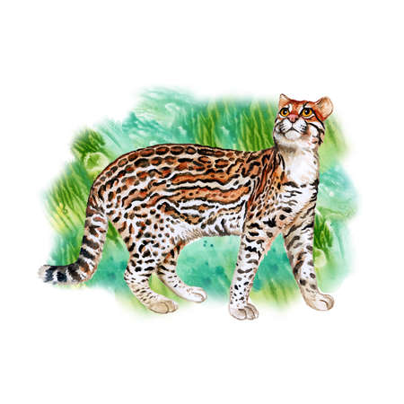 sweet grass: Watercolor portrait of ocelot cat with dots, stripes isolated on green grass background. Hand drawn detailed sweet home pet. Bright colors, realistic look. Greeting card design. Clip art. Add text