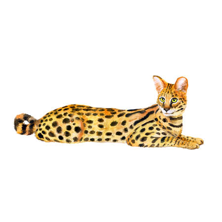 Watercolor portrait of serval cute cat with dots, stripes isolated on white background. Hand drawn detailed sweet home pet. Bright colors, realistic look. Greeting card design. Clip art. Add text