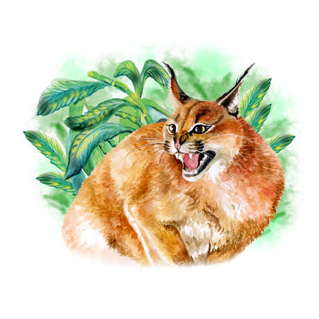 serengeti: Watercolor portrait of wild caracal cat with black ears isolated on tropical background. Hand drawn detailed sweet home pet. Bright colors, realistic look. Greeting card design. Clip art. Add text Stock Photo