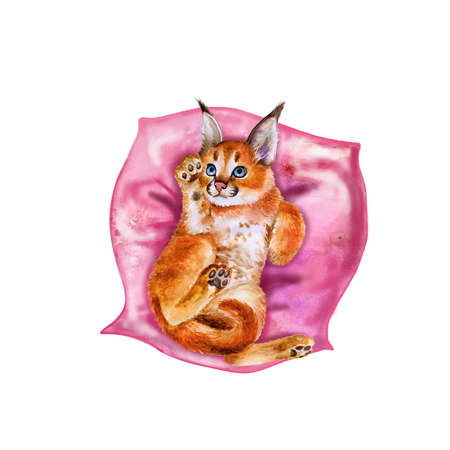 serengeti: Watercolor portrait of wild caracal kitten with black ears isolated on pink pillow background. Hand drawn detailed sweet home pet. Bright colors, realistic look. Greeting card design. Clip art. Text