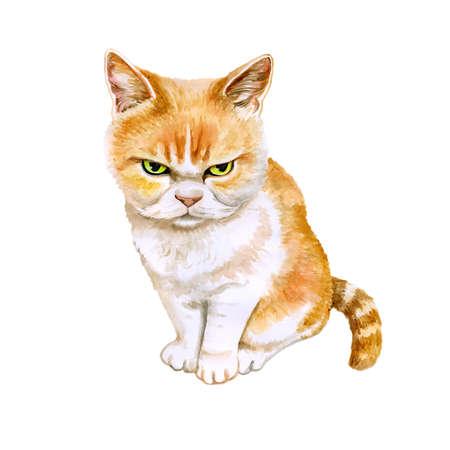 Aquarel portret van scottish fold kat Japanse boze kat op een witte achtergrond. Hand getrokken gedetailleerd huis huisdier zoet. Heldere kleuren, realistische look. Wenskaart design. Clip art. Voeg tekst toe Stockfoto