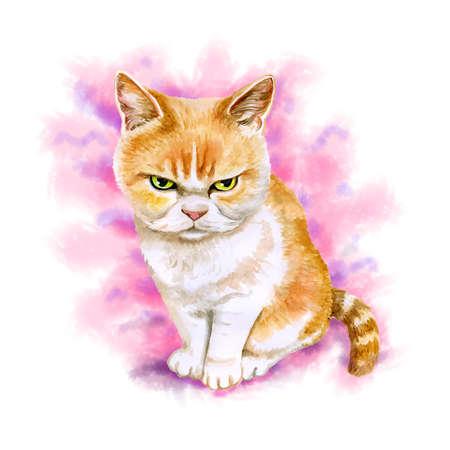 Watercolor portrait of scottish fold angry cat isolated on pink background. Hand drawn detailed sweet home pet. Bright colors, realistic look. Greeting card design. Clip art. Add your text