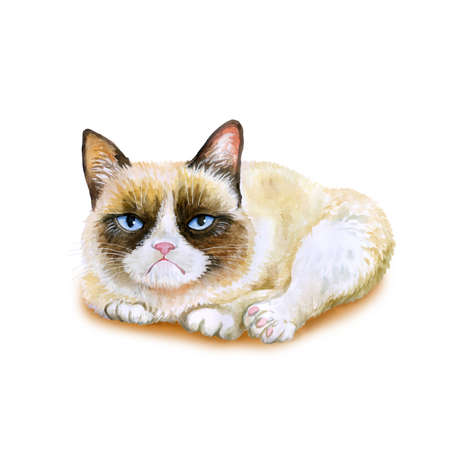 grumpy: Watercolor portrait of American snowshoe grumpy cat isolated on white background. Hand drawn detailed sweet home pet. Bright colors, realistic look. Greeting card design. Clip art. Add your Text Stock Photo