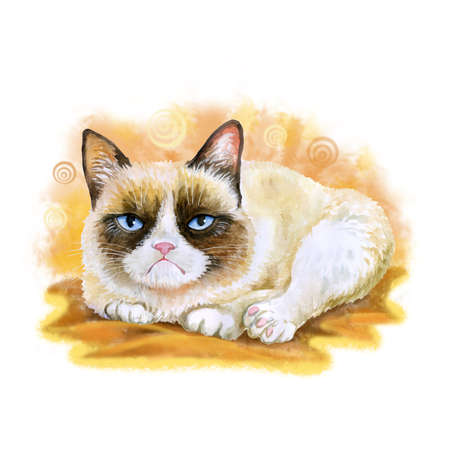 sullen: Watercolor portrait of American snowshoe grumpy cat isolated on orange background. Hand drawn detailed sweet home pet. Bright colors, realistic look. Greeting card design. Clip art. Add your Text