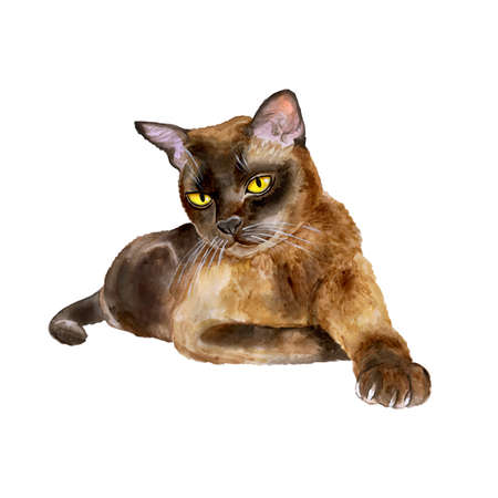burmese: Watercolor portrait of burmese sable american cat isolated on white background. Hand drawn detailed sweet home pet. Bright colors, realistic look. Greeting card design. Emerald eyes. Clip art. Text