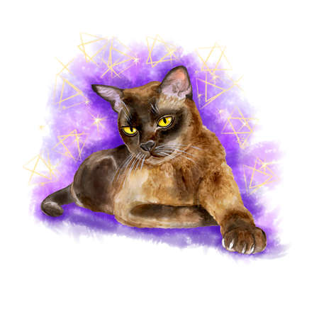 burmese: Watercolor portrait of burmese sable american cat isolated on violet background. Hand drawn detailed sweet home pet. Bright colors, realistic look. Greeting card design. Emerald eyes. Clip art. Text