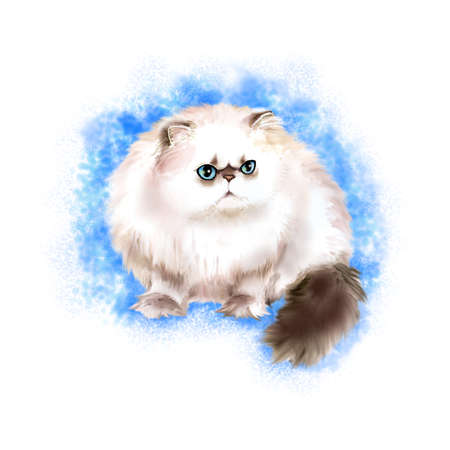 himalayan cat: Watercolor portrait of Himalayan Colourpoint longhair cat isolated on blue background. Hand drawn detailed sweet home pet. Bright colors, realistic look. Greeting card design. Clip art. Add text Stock Photo