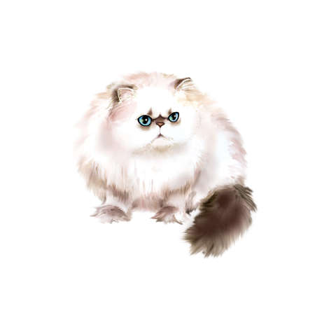 long haired: Watercolor portrait of Himalayan Colourpoint longhair cat isolated on white background. Hand drawn detailed sweet home pet. Bright colors, realistic look. Greeting card design. Clip art. Add text
