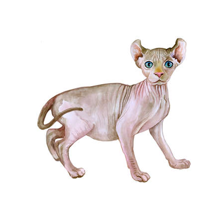 Watercolor portrait of rare hairless Elf cat isolated on white background. Hand drawn detailed sweet home pet. Bright colors, realistic look. Greeting card design. Clip art. Add text