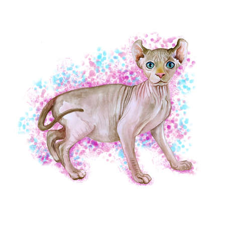 add text: Watercolor portrait of rare hairless Elf cat isolated on pink and blue background. Hand drawn detailed sweet home pet. Bright colors, realistic look. Greeting card design. Clip art. Add text Stock Photo