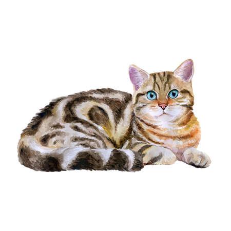 Aquarel portret van blauw, bruin britse marmeren kort haar kat die op een witte achtergrond. Hand getrokken huis huisdier zoet. Heldere kleuren, realistische look. Wenskaart design. Clip art. Voeg uw tekst