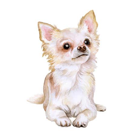 Aquarel portret van de populaire Mexicaanse ras Chihuahua hond geïsoleerd op een witte achtergrond. Hand getrokken huis huisdier zoet. Wenskaart design. Clip art. Voeg uw tekst. Kortharige (vlotte laag), wit