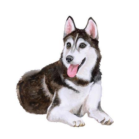 Aquarel portret van Siberische Husky hond ras geïsoleerd op een witte achtergrond. Hand getrokken huis huisdier zoet. Heldere kleuren, realistische look. Wenskaart design. Clip art. Voeg uw tekst. Zwart en wit