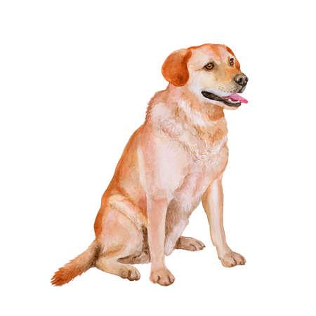 빨강, 흰색 래브라도 리트리버 품종 총 개의 수채화 초상화, 랩, 흰색 배경에 고립입니다. 손 달콤한 애완 동물을 그려. 밝은 색상, 현실적인 모양. 카드