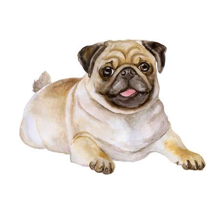 Aquarel portret van witte en zwarte Pug rashond, Mops, Chinese pug, Nederlands bulldog, Nederlandse mastiff, Mini mastiff, Carlin op een witte achtergrond. Hand getrokken lief huisdier. Wenskaart ontwerp Stockfoto