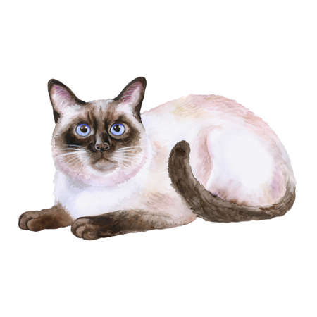 Watercolor portrait of siamese black and white short hair cat isolated on white background. Hand drawn sweet home pet. Bright colors, realistic look. Greeting card design. Clip art. Add your text