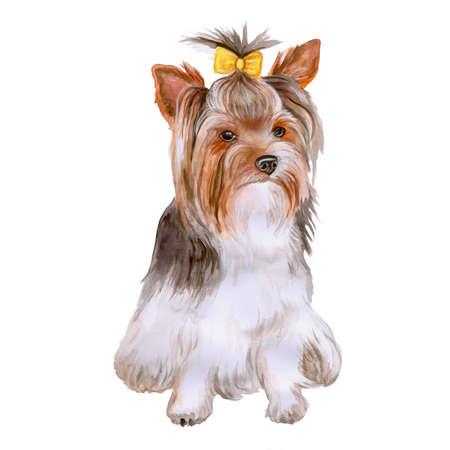 yorkshire: Watercolor portrait of Yorkshire terrier breed dog, Yorkie isolated on white background. Hand drawn sweet pet. Bright colors, realistic look. Greeting card design. Clip art. Add your text Stock Photo